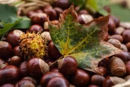 castanas fruto otoño
