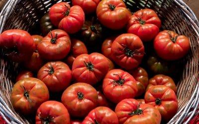 Tomate Raf: curiosidades del rey de los tomates